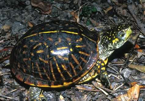 a to z the usa indiana state reptile