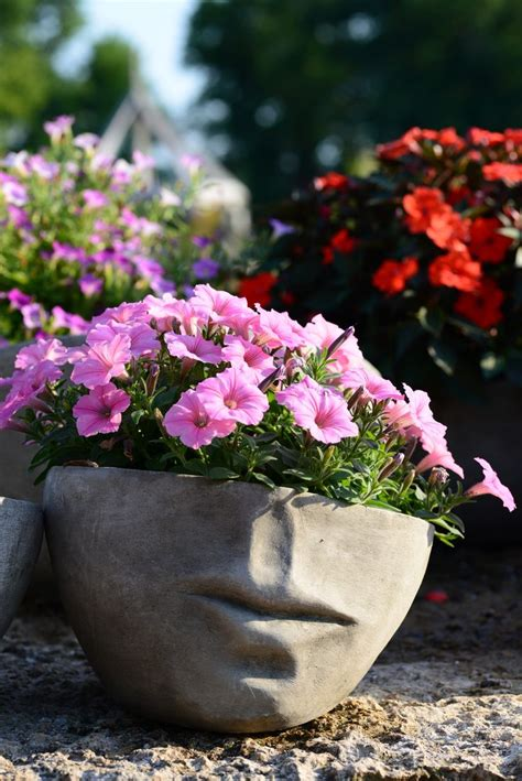 wave petunias in pots lips pot with wave petunias container gardening inspiration pinterest lips pots and petunias