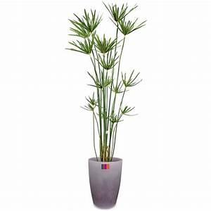 Papyrus 125cm Plante Artificielle Extrieur Achat