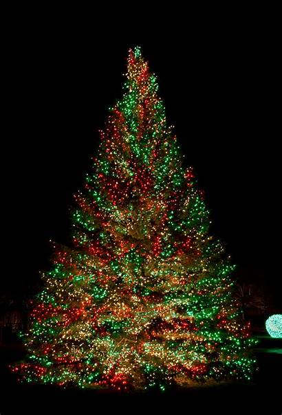 Lights Tree Christmas Awesome Led Dazzling Trees