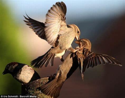 kung fu birds style  pics  gif izismilecom
