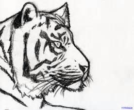 Easy Tiger Sketches