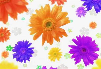 Colorful Flowers Desktop Wallpapers Flower Backgrounds Background