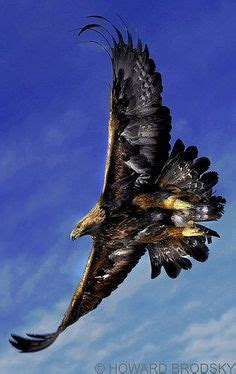 red kite bird of prey from dimitri samohin inspiration