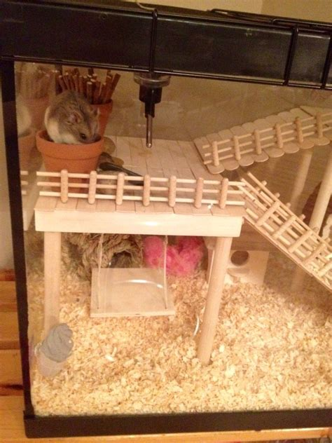 aquarium cages for hamsters 104 best images about hamster diy on hamsters guinea pigs and syrian hamster