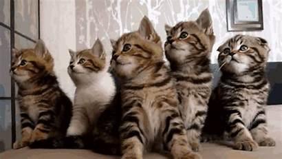 Kittens Perfect Giphy Cat Cats Kitten Gifs