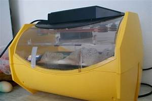 Couveuse Oeuf De Poule : incubation artificielle 19 me jour ~ Premium-room.com Idées de Décoration