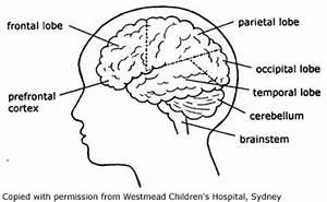 Kids Health Info : Brain injury - How the brain works