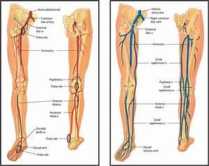 Left Leg Femoral Artery