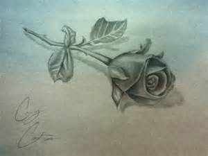 Image result for Rose Drawings