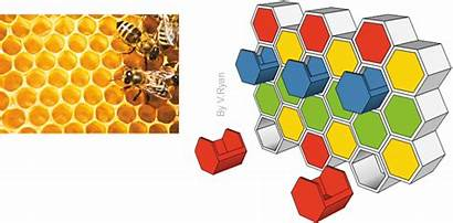 Nature Inspired Honeycomb