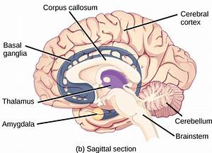 35 3  The Central Nervous System