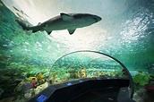 Welcome to Deep Sea Diary, Ripley's Aquarium of Canada's ...