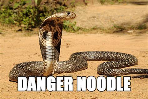 Snake Meme Snake Better Names For Things Your Meme