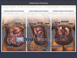 Abdomen Anatomy Female
