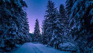 27, Night, Forest, Wallpapers, On, Wallpapersafari