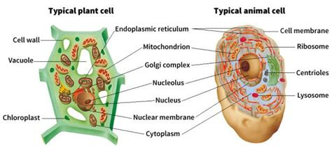 cytology cell organelles introduction plant cell