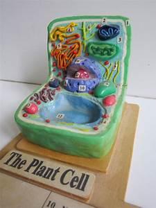 plant_cell_by_ballerinatwin3-d5ramqz.jpg (900×1200) | 3D ...