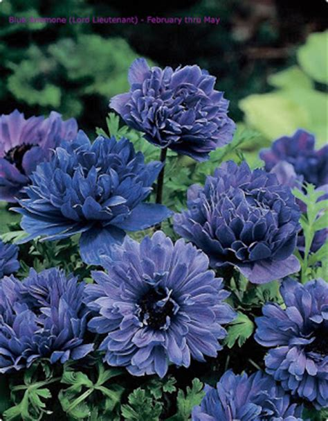 floral artistry blue flower types