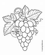 Coloring Grapes Pages Fruits Printable Berries Leaves 4kids sketch template