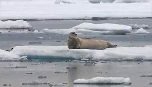 Hungry polar bear surprises a seal - The Hunt: Episode 2 ...