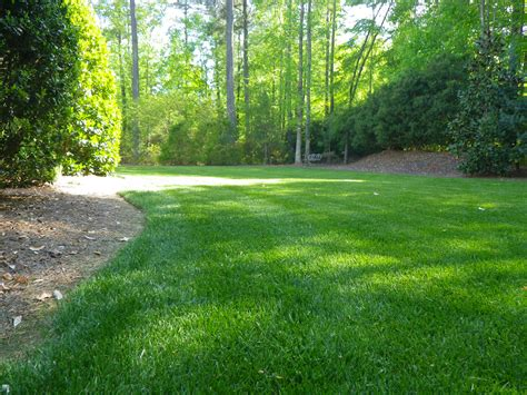Best 25+ Zoysia Sod Ideas On Pinterest