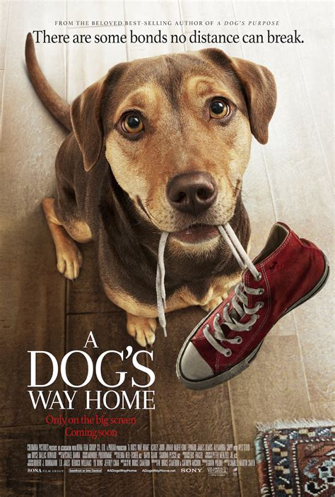 brand  trailer  poster   dogs  home released