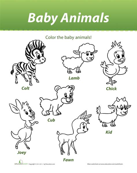 baby animals names worksheet 86 coloring pictures of animals and their homes