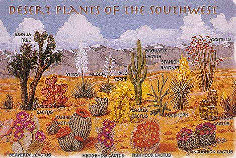 desert plants plants   southwest desert plants