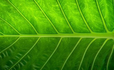 Abstract Green Leaf Wallpaper by Free Images Nature Forest Abstract Wood Lawn