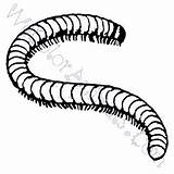 Millipede Coloring Pages sketch template