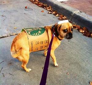 diy costume ideas for your part 2 familypet