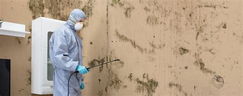 mold management removal services management