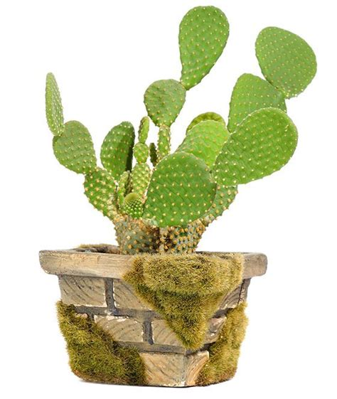 Kokie augalai tinka jums pagal Zodiako ženklą? - HOROSKOPAI   PatarimuPasaulis.lt