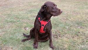 How To Put On Different Types Of Dog Harnesses