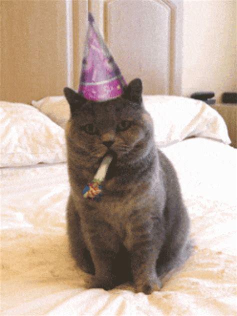 funny cat happy birthday animated gif speakgif