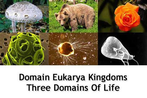 domain eukarya kingdoms  domains  life