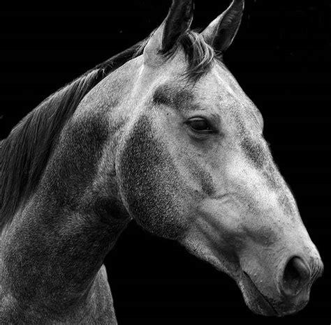 horse ghost similar