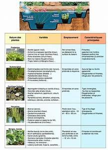 Plante Filtrante Pour Bassin : maintenir une eau de bassin limpide et pure dossier ~ Louise-bijoux.com Idées de Décoration