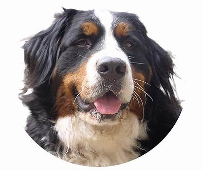 Dog Dogs Transparent Background Pngimg Puppy Funny