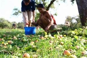 äpfel Pflücken Berlin : 11 nachhaltige food projekte aus berlin die wir toll ~ Lizthompson.info Haus und Dekorationen
