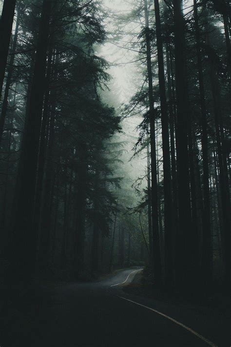 aesthetic forest hd wallpapers