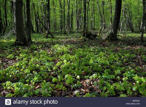 Image result for communal european forests
