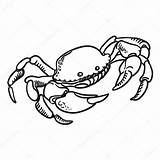 Crab Drawing Dungeness Hand Getdrawings Vector sketch template