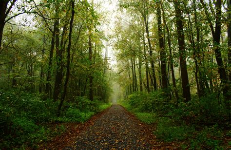beautiful forest beautiful forest paths www pixshark com images galleries with a bite