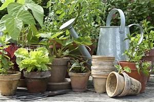 Que Planter En Juin : plantes aromatiques planter en juin liste ooreka ~ Melissatoandfro.com Idées de Décoration