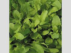 Kings Seeds Organic Vegetable Seeds A leading supplier