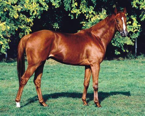horseland  love horses angol teliver