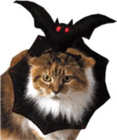 bat cat costume bat cat costume petwork 174 marketplace