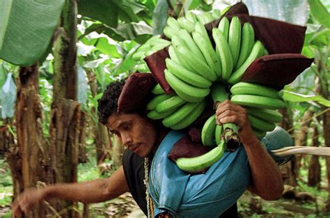 US banana firm hired Colombian paramilitaries | US ...